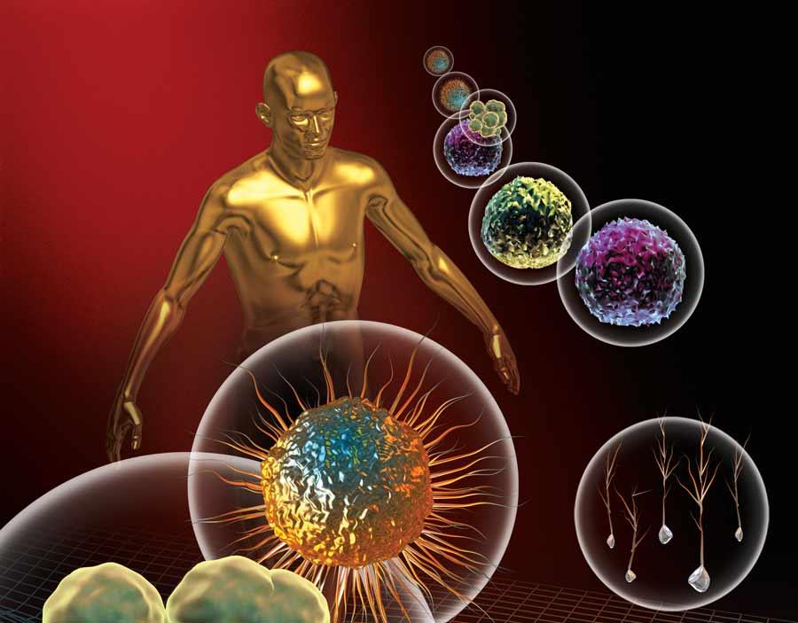 imunita-chaga