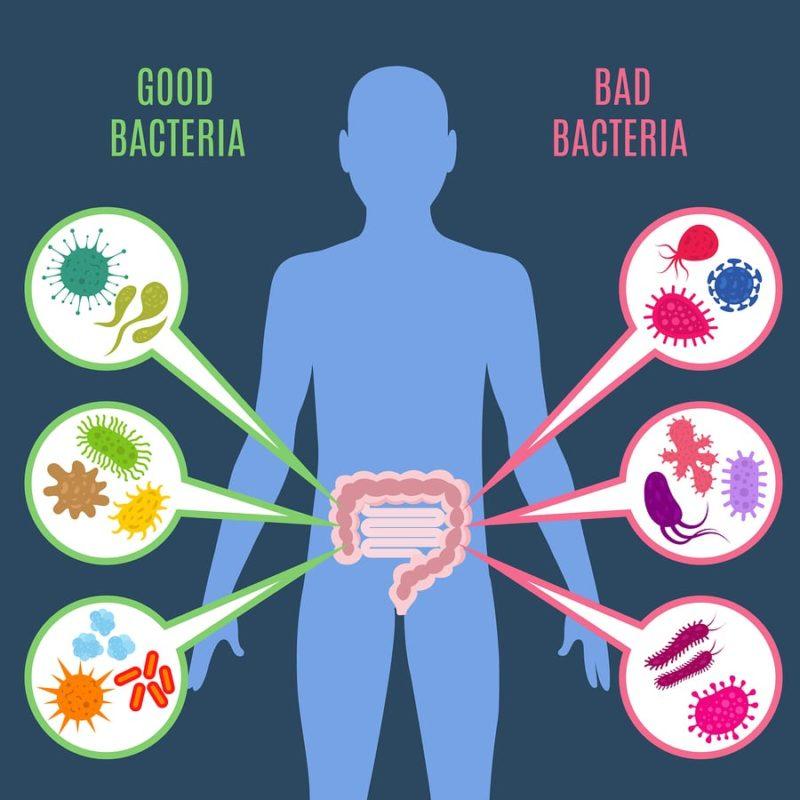 trávicí soustava s dobrými a špatnými bakteriemi